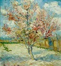 Pink Peach Tree in Blossom Reminiscence of Mauve