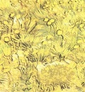 Field of Yellow Flowers, A