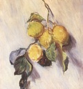 Branch from a Lemon Tree Door A [1884]
