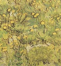 a field of yellow flowers, arles
