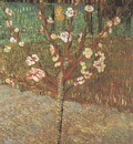 almond tree in blossom, arles