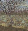 apricot blossom, arles
