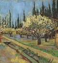 flowering orchards, surrounded by cypress, arles