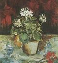 geranium in pot, paris