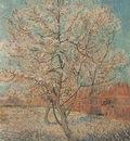peach blossom, arles
