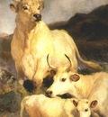 landseer wild cattle of chillingham