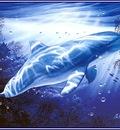 pa LassenCR 10 DolphinVision