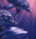 crl DolphinQuestII