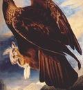 audubon golden eagle 1833