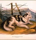 bs na Audubon Hare Indian Dog