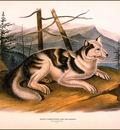 bs na Audubon Hare Indian Dog