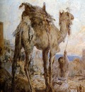 Bauer Marius The camel Sun
