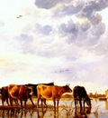 cuyp cattle in a river c1650