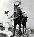 Dagnan Photo Horses2