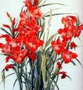 demuth gladiolus