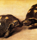 Eckhout Albert Two Brazilian tortoises Sun