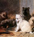 Eerelman Otto Five little pupies Sun