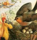 kb Fitzgerald JA Cock Robin Defending His Nest