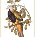 PO ptb 54 Ptilope Magnifique