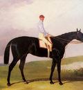 Hall Harry Ellinton A Dark Bay Racehorse With Tom Aldcroft Up