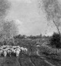 Hamel Willem Sheepsherd at Rolde Sun