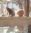 kb Hanks Steve KC and the Pumpkin