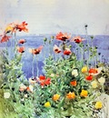 hassam poppies, isles of shoals 1891 r