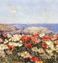 hassam poppies on the isles of shoals