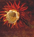 heade study of a yellow flower