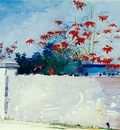 Homer A wall, Nassau, 1898, 37 5x54 cm, Watercolor, Metropol