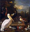 Hondecoeter de Melchior The floating feather Sun