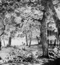 Knip Josephus Forest view Sun