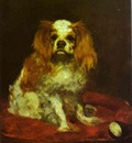 Edouard Manet A King Charles Spaniel