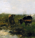 Maris Willem Drinking cows Sun