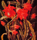 Cactus with Scarlet Blossoms