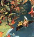 kb Naish John The Midsummer Fairies1