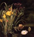 A Lily Pond