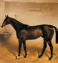 Nightingale Basil The Racehorse Abbeywood In A Stable