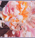 bs flo Ann Pember Piquant Peony