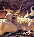Sargent John Singer Oxen in Repose