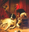verboeckhoven the favorite animals of king leopold i