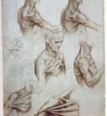 Leonardo Muscles of the neck and shoulders, ca 1515, Pen and