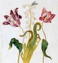 Withoos Alida Flowers Sun