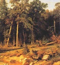 shishkin a pine forest viatka province