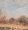 Apple Trees in Flower Spring Morning