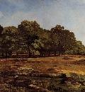 Avenue of Chestnut Trees near La Celle Saint Cloud1