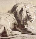 etude of lion