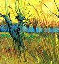 pollard willows with setting sun detail