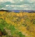 wheat field with cornflowers