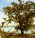 Bierstadt Albert A View from Sacramento
